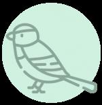 bird removal charlotte nc