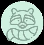 raccoon removal charlotte nc