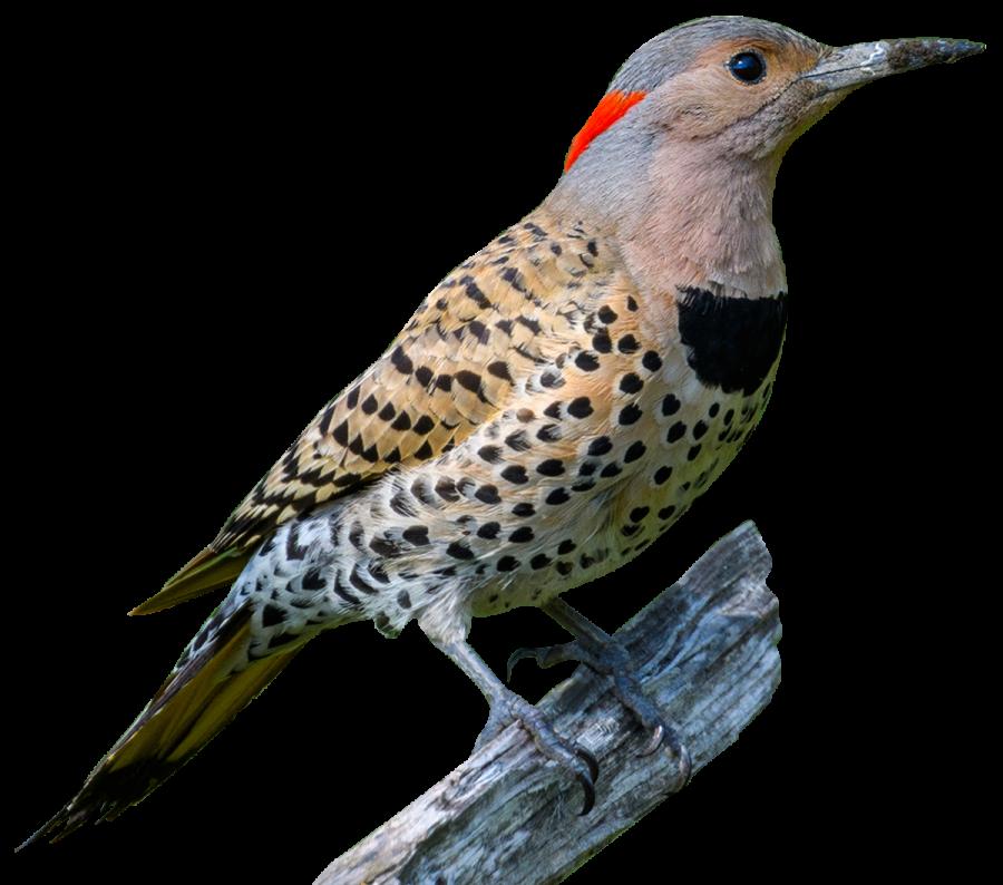 bird-suspect-original